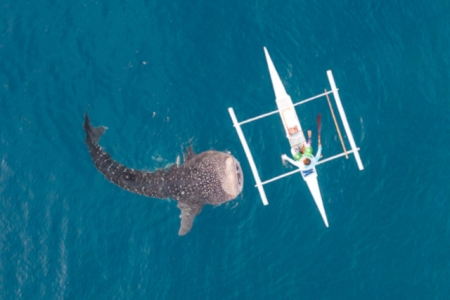 SHARK DRONE COVERAGE
